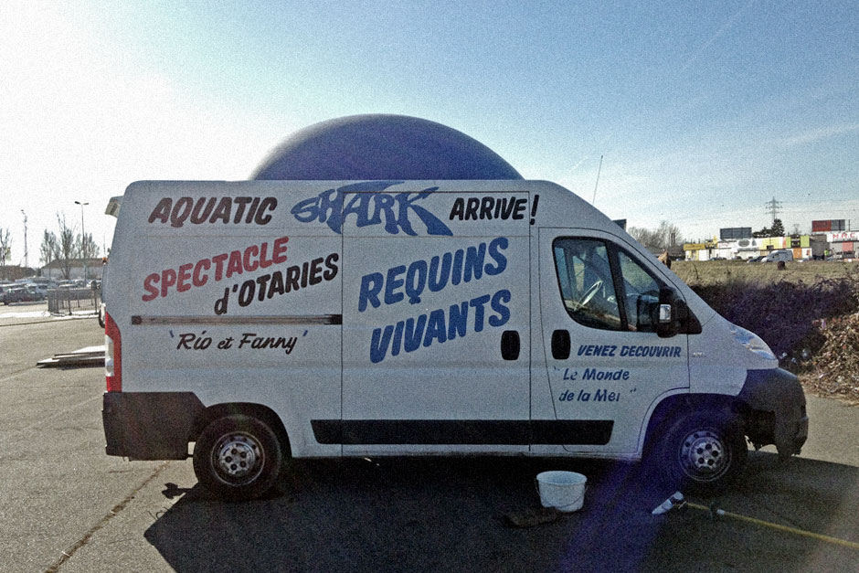 Requins vivants